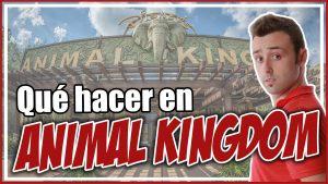 Qué hacer en Animal Kingdom