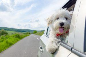 Viajar con mascotas 2